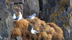 Seagulls in the nest - stock footage