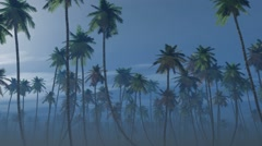Mysterious foggy palm forest in a full moon night Stock Footage