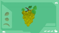 Green Grapes  - Vector Graphics - Food Animation - healthy Stock Footage