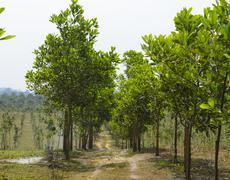 The path between farmland - stock photo