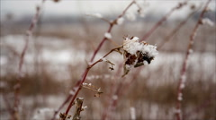 Raspberry cane with hoarfrost in winter field - stock footage