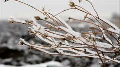 Twig with hoarfrost in winter field - stock footage