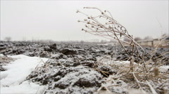 Twig with hoarfrost in winter field Stock Footage