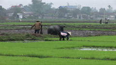 Vietnamese farmers working in a paddy field - stock footage