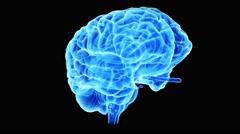 The human brain - stock footage