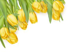 Isolated tulip frame. EPS 10 - stock illustration