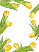 Isolated tulip frame. EPS 10 - stock illustration