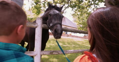 Little boys feeding horse a carrot on farm Stock Footage