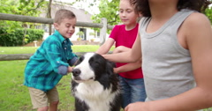 Little boys playing with a Border Collie dog in park Stock Footage
