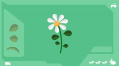 Daisy  - Vector Graphics - Food Animation - healthy Stock Footage
