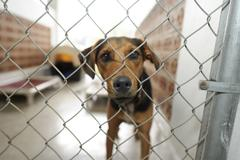 Dog in an animal shelter looking through the fence  Stock Photos