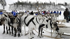 reindeer team on national holiday - stock footage