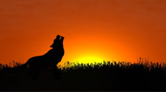 Wolf howling at sunset Arkistovideo