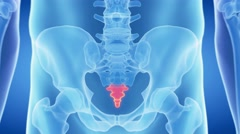 medical 3d animation of the red highlighted coccyx - stock footage