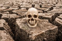 barren is dead - stock photo