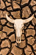 Stock Photo of barren is dead