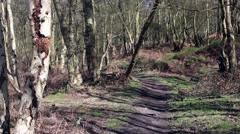 A deep forest path in early spring Stock Footage