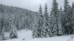 Snowy Pine Forest - Landscape Stock Footage