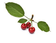 Stock Photo of Isolated red cherries