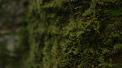 4K Close Up Moss Growing On Old Brick Wall - stock footage