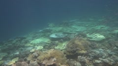Big school of small fish dancing in slow motion over corals Stock Footage