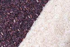 Row of rice berry and jasmine rice grains Stock Photos