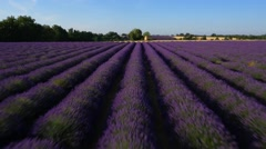 Aerial of beautiful lavender field in Valensole Stock Footage