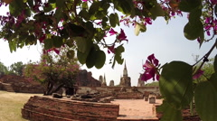 View of the ruins of the temple through the leaves Stock Footage