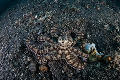 Coral Reef Diversity - stock photo