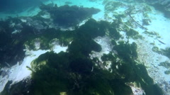 Weeki Wachee River Florida Fresh water springs Stock Footage