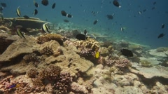 Highly diverse pristine coral reef in the Indian Ocean Stock Footage