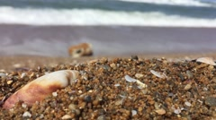 Macro shot of sea shell and waves in slow motion - stock footage
