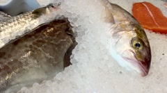 Frsh fish at the market Stock Footage