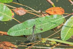 Deadly dragonfly on a leaf - stock photo