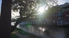 Tree next to water and boat yard Stock Footage
