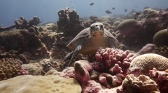 Turtle pauses and swims in slow motion Stock Footage