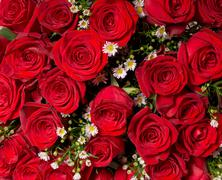 Natural red roses background Stock Photos