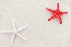 White and red starfishes on sand, space for text Stock Photos
