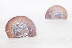 Shell fossils on sand, shallow depth of field - stock photo
