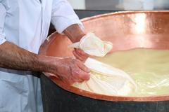 Senior expert cheesemaker collects the cheese with the tarp from the large co Stock Photos