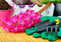 Hyacinth flowers with gardening tools. - stock photo