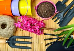 Hyacinth flowers with gardening tools. Stock Photos