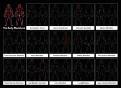 Body Meridians Detailed Diagram Black Stock Illustration