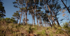 African american runner trail running and jumping in forest - stock footage