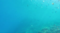 The underwater world of the Red Sea Stock Footage