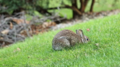 Bunny Rabbit Runs Away Stock Footage