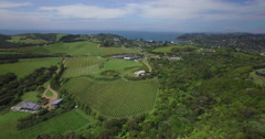 New Zealand Vineyards Stock Footage
