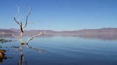 Dead Tree Pyramid Lake Nevada Stock Footage