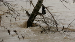 Submerged tree in flood river flow that splashing and foaming, close up. Stock Footage