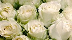Big Beautiful Buds of White Roses - stock footage